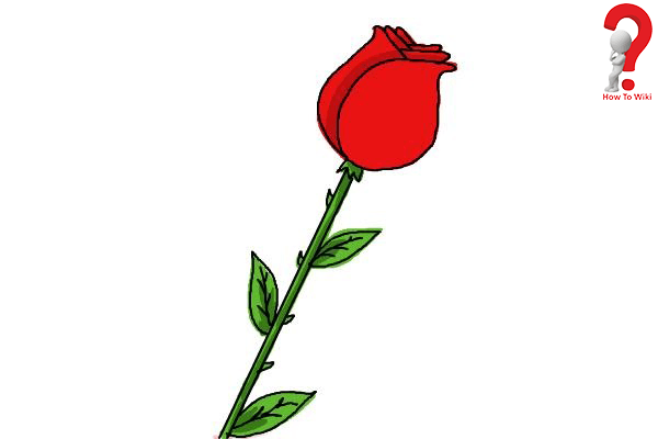 Draw A Rose For Beginners