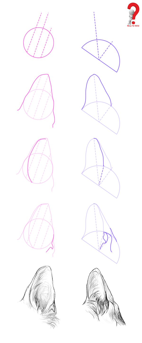 How to Draw Animal Ears