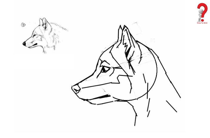 Easy ways To Draw Furries For kids
