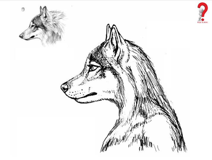 Drawing of Furries