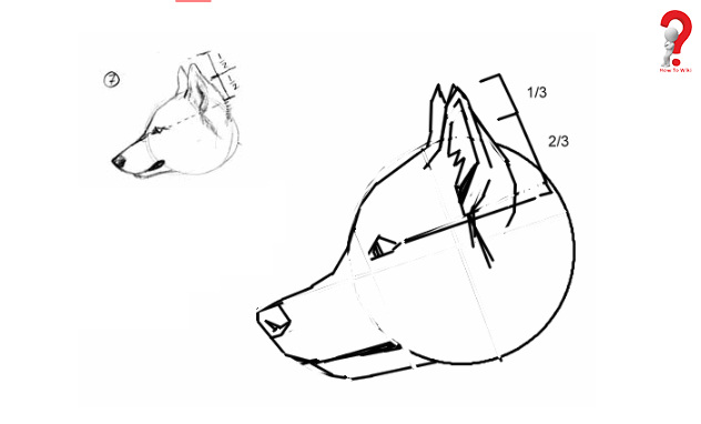 Steps To Draw Furries for kids